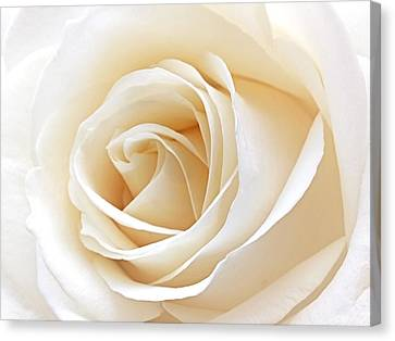 White Rose Heart Canvas Print by Gill Billington