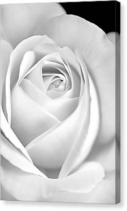 White Rose In Black And White Canvas Print