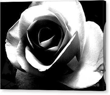 White Rose Canvas Print by Nina Ficur Feenan