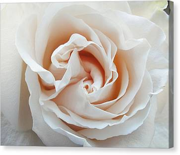 Canvas Print featuring the photograph White Rose by Tiffany Erdman
