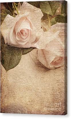 White Roses Canvas Print by Jelena Jovanovic