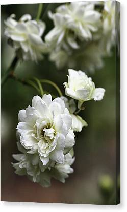 Canvas Print featuring the photograph White Roses by Joy Watson