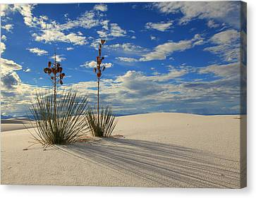 White Sands Afternoon 2 Canvas Print