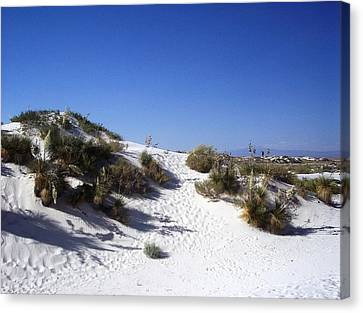 White Sands Foilage Canvas Print by The GYPSY And DEBBIE