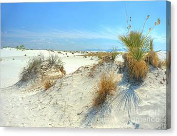 White Sands Foliage Canvas Print by John Kelly