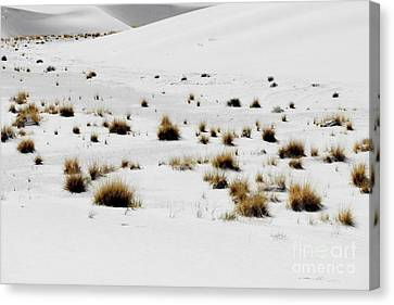 White Sands Life Canvas Print
