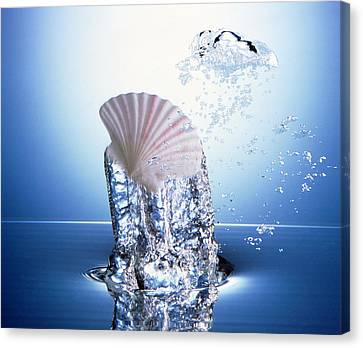 White Scallop Shell Being Raised Canvas Print by Panoramic Images
