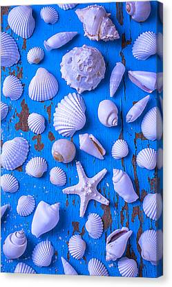 White Sea Shells On Blue Board Canvas Print by Garry Gay
