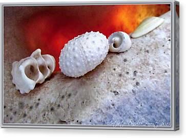 White Seashells And Purple Conch  Canvas Print by Danielle  Parent