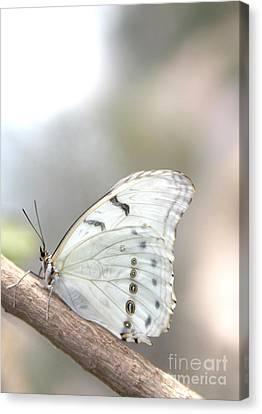 White Serenity Canvas Print