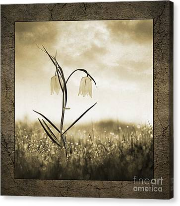 White Snakes Head Fritillary In Morning Dew Canvas Print by Tim Gainey