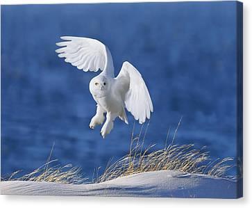 White Spirit Demon Canvas Print