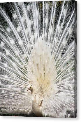 Canvas Print featuring the photograph White Spray by Blair Wainman