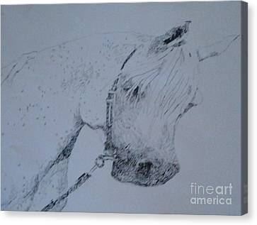 Arabian Horse Canvas Print - White Stallion by Patries Van Dokkum