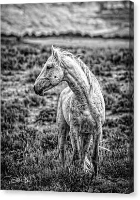 White Stallion Watching Canvas Print by Joan Davis