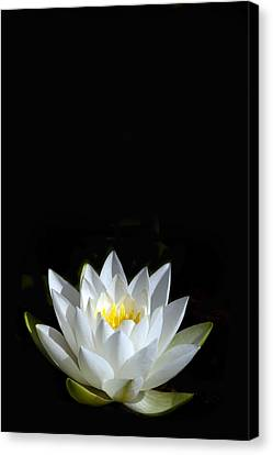 White Star Canvas Print