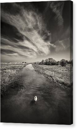 Lonely Canvas Print - White Swan by Dave Bowman
