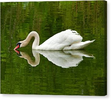 Canvas Print featuring the photograph Graceful White Swan Heart  by Jerry Cowart
