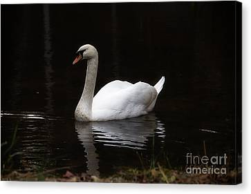 White Swan Lake Canvas Print by Deborah Scannell