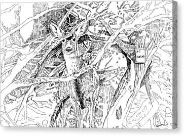 White-tail Encounter Canvas Print