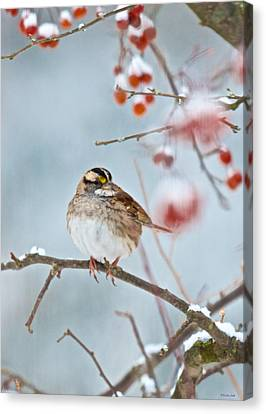 White-throated Sparrow Braving The Snow Canvas Print