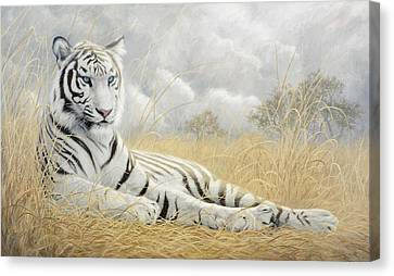 White Tiger Canvas Print by Lucie Bilodeau