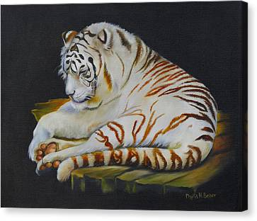 Canvas Print featuring the painting White Tiger Sleeping by Phyllis Beiser