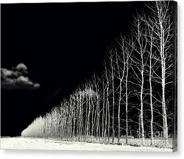 White Trees Canvas Print by Stelios Kleanthous