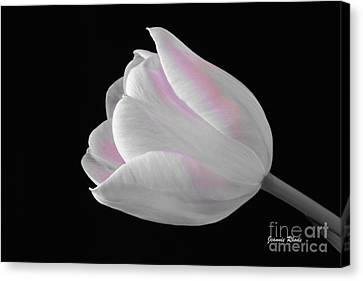 Canvas Print featuring the digital art White Tulip With Pink by Jeannie Rhode