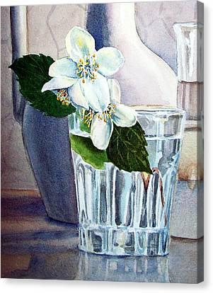 White White Jasmine  Canvas Print by Irina Sztukowski