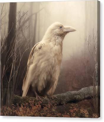 White Wild Raven Canvas Print by Cindy Grundsten