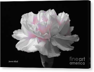 Canvas Print featuring the digital art White With Pink Carnation by Jeannie Rhode