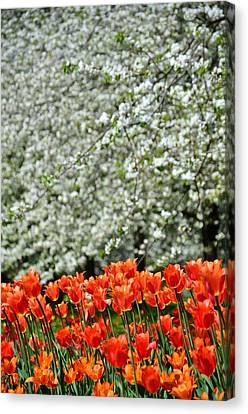 White With Red Canvas Print by Gynt