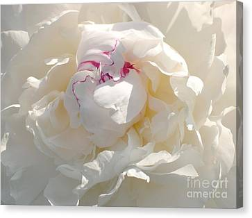White With Red Peony Canvas Print by Addie Hocynec
