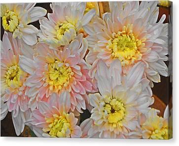 White Yellow Chrysanthemum Flowers Canvas Print by Johnson Moya
