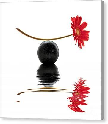 White Zen Gerbera Canvas Print
