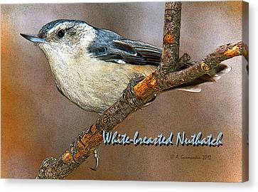 Canvas Print featuring the photograph Whitebreasted Nuthatch by A Gurmankin