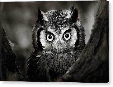 Hiding Canvas Print - Whitefaced Owl by Johan Swanepoel