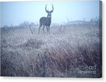 Whitetail Buck In Mist Canvas Print by Thomas R Fletcher