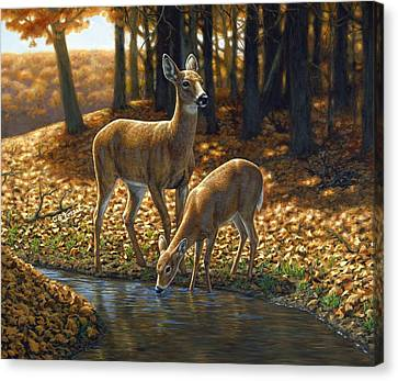 Whitetail Deer - Autumn Innocence 1 Canvas Print by Crista Forest