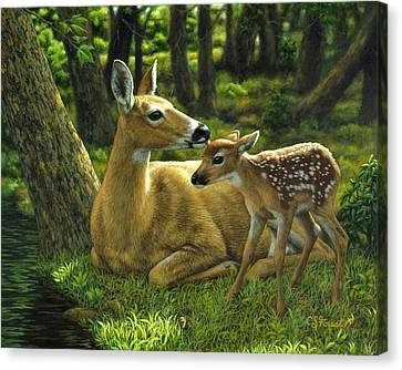 Whitetail Deer - First Spring Canvas Print by Crista Forest
