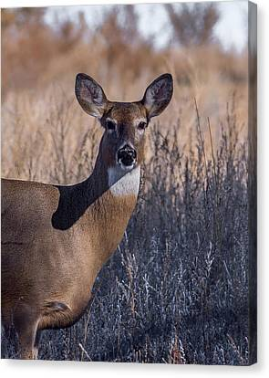 Whitetail Doe Keeping Watch Canvas Print