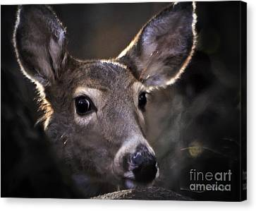 Whitetail Doe Canvas Print by Nava Thompson