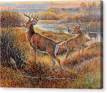 Whitetail Sunrise Canvas Print by Steve Spencer
