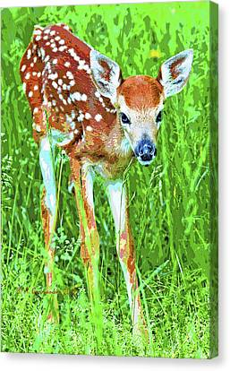 Canvas Print featuring the photograph Whitetailed Deer Fawn Digital Image by A Gurmankin