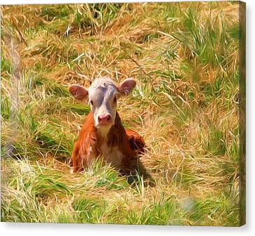 Cow Canvas Print - Who Dat ? by Donna Kennedy