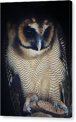 Who Gives A Hoot Canvas Print by Paulette Thomas