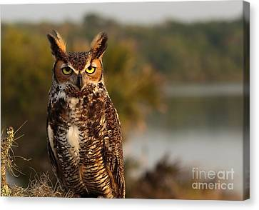 Who Goes There Canvas Print by Mary Lou Chmura