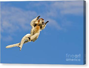 Who Needs Wings? Canvas Print by Ashley Vincent