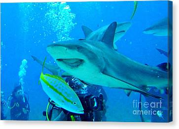 Who Said Sharks Were Mean Canvas Print by John Malone
